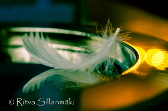 Feather on a silver plate (20 of 35)