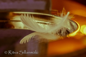 Feather on a silver plate (21 of 35)