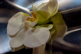 orchid--5
