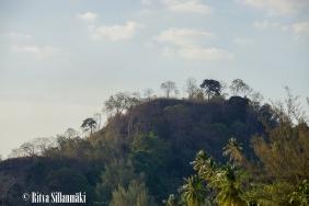 trees _Thailand-15-1-2