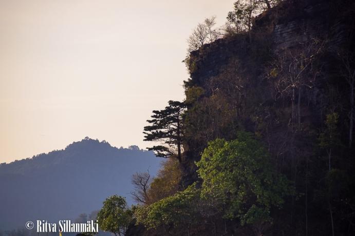 trees _Thailand-15-2-2