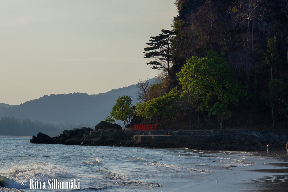 trees _Thailand-15-3-2