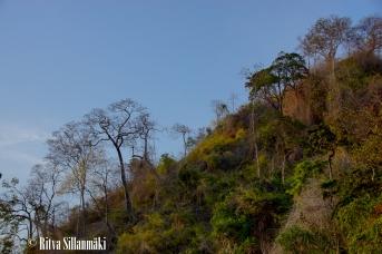 trees _Thailand-15-4-2
