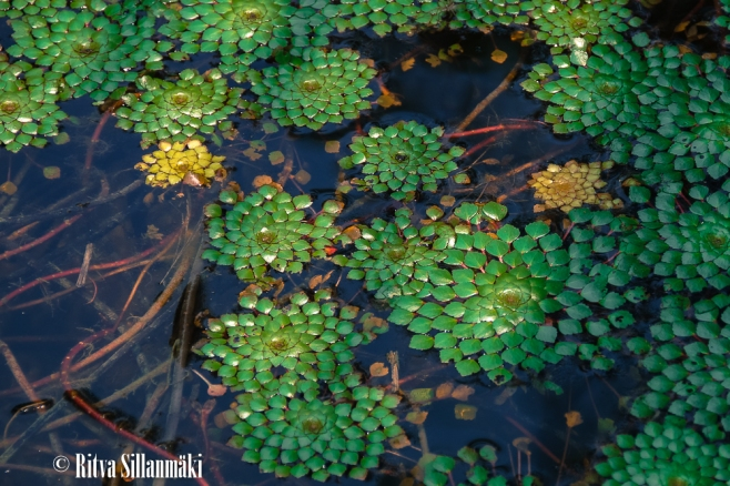 water Plants-1-2