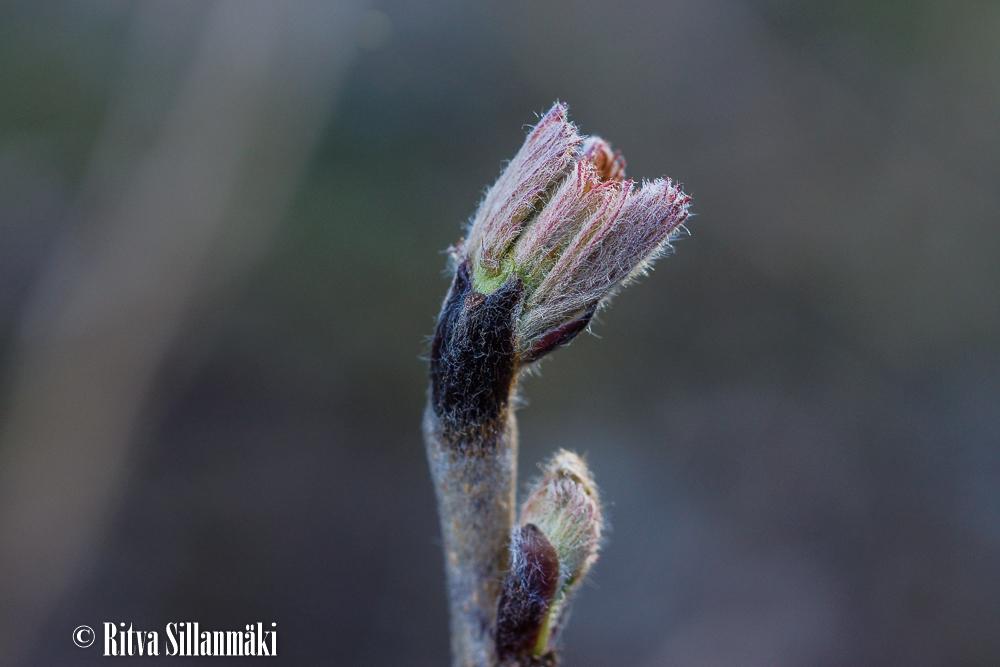 April 2015_ Ritva Sillanmäki (16 of 36)