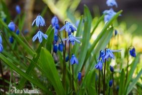 spring flowers (4 of 37)