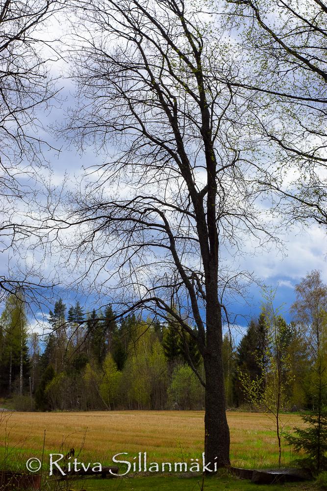 Ritva Sillanmäki - spring 2015 (1 of 8)