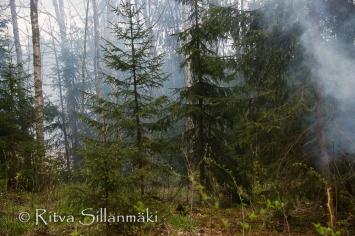 Ritva Sillanmäki - spring 2015 (3 of 102)