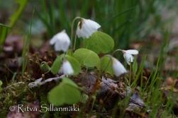 Ritva Sillanmäki - spring 2015 (31 of 102)