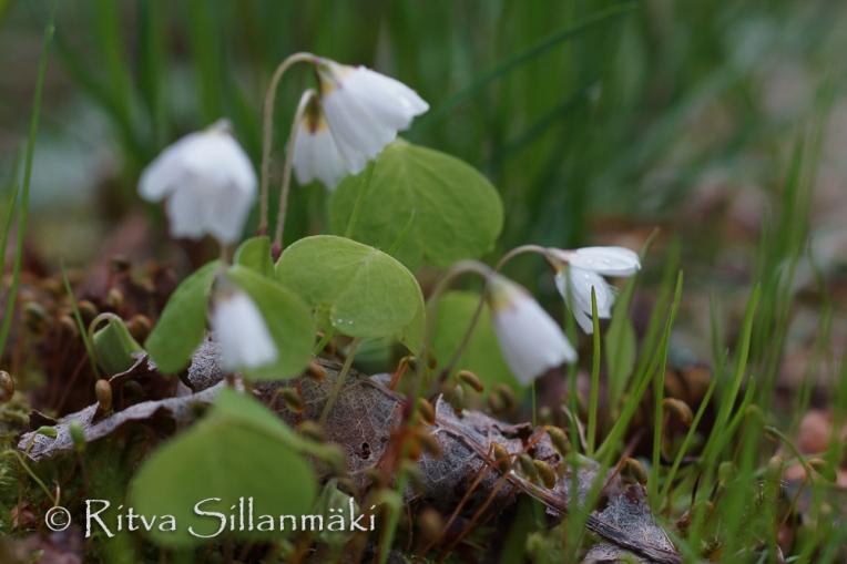 Ritva Sillanmäki - spring 2015 (32 of 102)