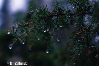 Ritva Sillanmäki_droplets (20 of 80)