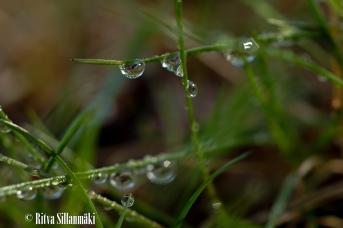 Ritva Sillanmäki_droplets (36 of 80)