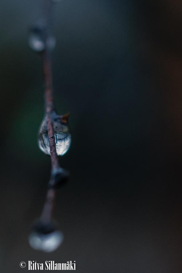 Ritva Sillanmäki_droplets (5 of 80)