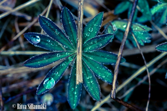 Ritva Sillanmäki_droplets (8 of 80)