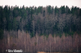 Ritva Sillanmäki_Kumianmylly (51 of 92)
