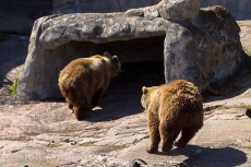 zoo Herlsinki (186 of 345)