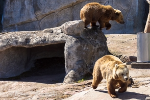 zoo Herlsinki (190 of 345)