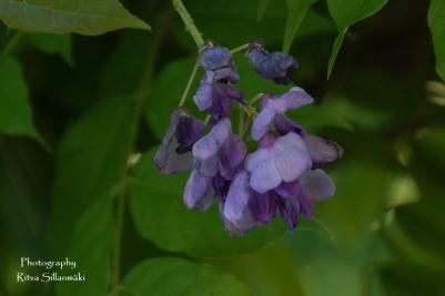 flowers (11 of 23)