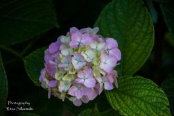 flowers (16 of 23)