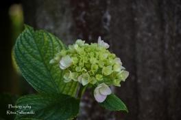flowers (17 of 23)