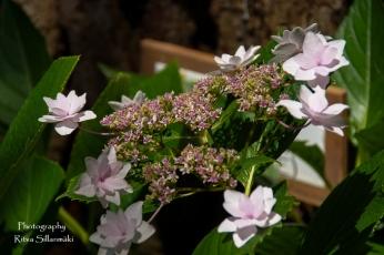 flowers (18 of 23)