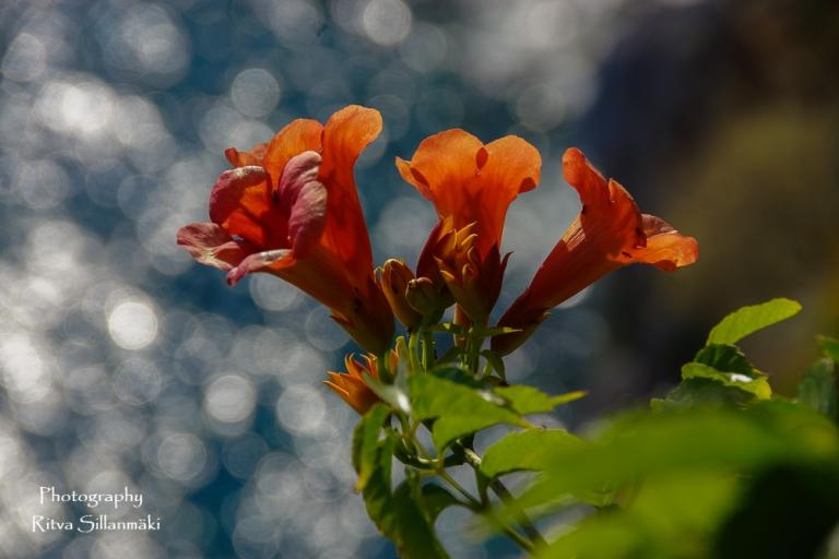 flowers (3 of 7)