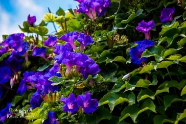flowers (5 of 23)