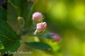 wild flower- Ritva Sillanmäki (103 of 144)