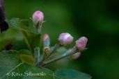 wild flower- Ritva Sillanmäki (122 of 144)