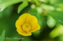 wild flower- Ritva Sillanmäki (137 of 144)