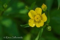 wild flower- Ritva Sillanmäki (142 of 144)