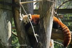 zoo Herlsinki (125 of 345)