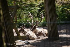 zoo Herlsinki (143 of 345)