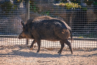 zoo Herlsinki (221 of 345)