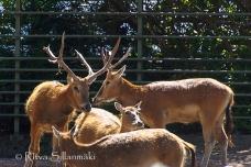 zoo Herlsinki (226 of 345)