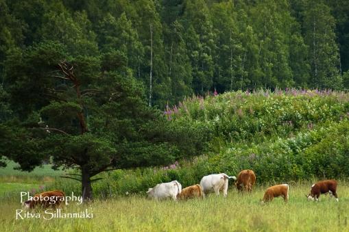 Korkee Immilän mylly, Heinola (52 of 93)
