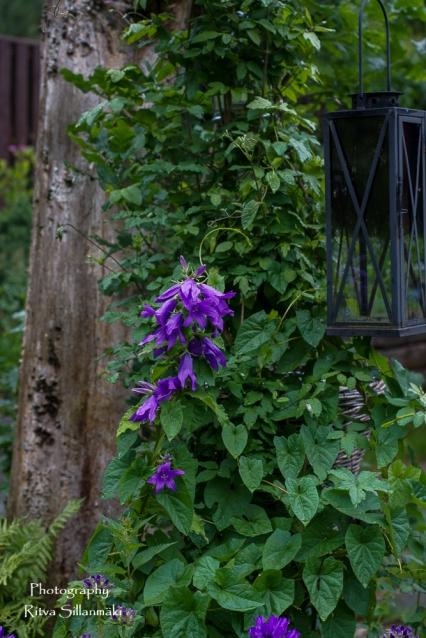 summer flowers (20 of 104)