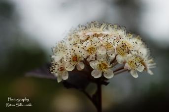 summer flowers (22 of 104)