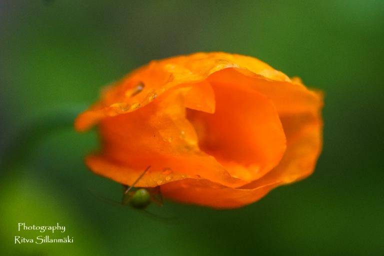summer flowers (25 of 104)
