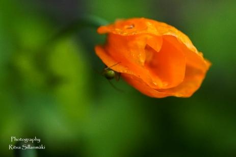 summer flowers (26 of 104)