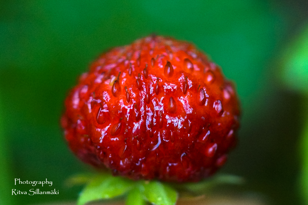 summer flowers (31 of 104)