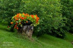 summer flowers (52 of 104)
