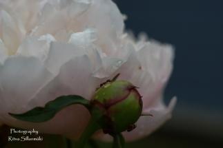 summer flowers (66 of 104)