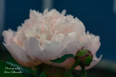 summer flowers (67 of 104)