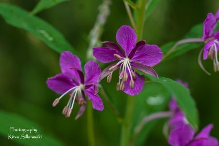 summer flowers (69 of 104)