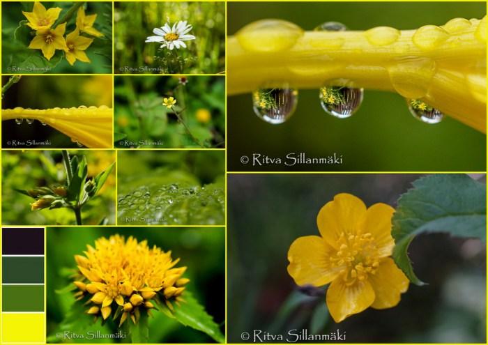 1-Drops, flowers, Bro garden