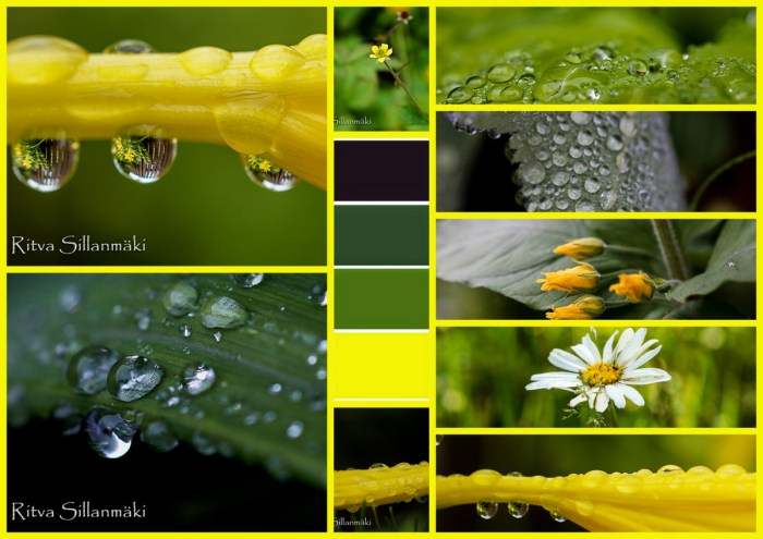 2-Drops, flowers, Bro garden1