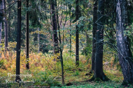 Autumn 2015 (142 of 233)