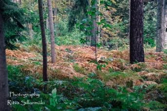 Autumn 2015 (143 of 233)