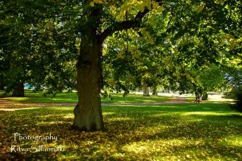 Autumn 2015 (55 of 233)